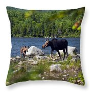 Window To The Moose Throw Pillow