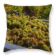 Wine Harvest Throw Pillow by Garry Gay