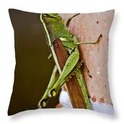 Wings In Brown Throw Pillow