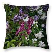 Winning Color Throw Pillow by Susan Herber