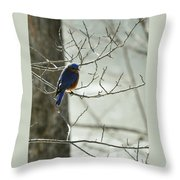 Winter Bluebird Throw Pillow