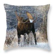 Winter Bull Throw Pillow