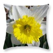 Winter Daffodil  Throw Pillow