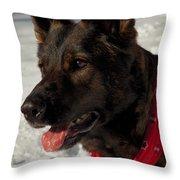 Winter Dog Throw Pillow by Karol Livote