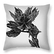 Winter Dormant Rose Of Sharon - Bw Throw Pillow