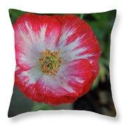 Winter Poppy Throw Pillow