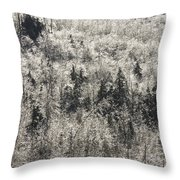 Winter Trees Covered In Ice Throw Pillow