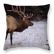 Winter Wapiti Throw Pillow