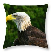 Wisconsin Bald Eagle Throw Pillow