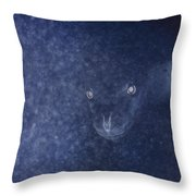 With Glowing Eyes, A Leopard Seal Peers Throw Pillow