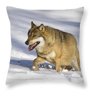 Wolf Canis Lupus Walking In Snow Throw Pillow