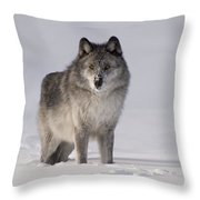 Wolf In The Snow Throw Pillow