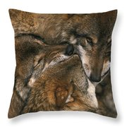 Wolf Pack Biting Each Others Muzzles Throw Pillow