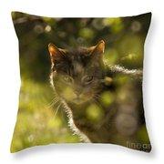 Wonky Eyed Tiger Throw Pillow