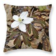 Wood Anemone - Anemone Quinquefolia Throw Pillow