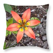 Wood Lily Lilium Philadelphicum Throw Pillow