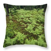 Woodland View In A Pine Forest Throw Pillow