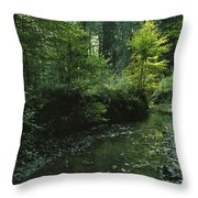 Woodland View With Stream Throw Pillow