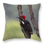 Woodpecker 4 Throw Pillow