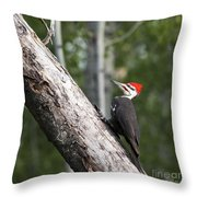Woodpecker Sizes Me Up Throw Pillow