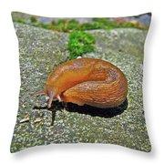 Working On My Tan - Arion Subfuscus Slug Throw Pillow