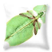 X-ray Of A Giant Leaf Insect Throw Pillow by Ted Kinsman