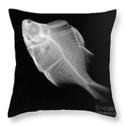 X-ray Of A Humphead Glassfish Throw Pillow