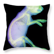 X-ray Of A Rabbit Throw Pillow