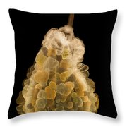 X-ray Of Fall Decorative Gourd Throw Pillow