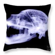 X-ray Of Kodiak Bear Skull Throw Pillow