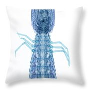X-ray Of Mantis Shrimp Throw Pillow
