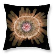 X-ray Of Shingle Urchin Throw Pillow