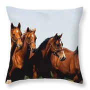 Yearling Thoroughbred Throw Pillow