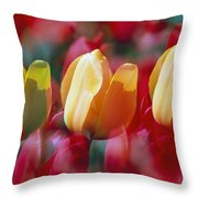 Yellow And Red Tulip Blooms Throw Pillow