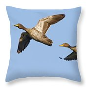 Yellow-billed Duck Anas Undulata Pair Throw Pillow