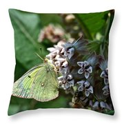 Yellow Cabbage Moth Throw Pillow