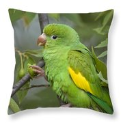 Yellow-chevroned Parakeet Brotogeris Throw Pillow