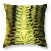 Yellow Commensal Shrimp On Crinoid Throw Pillow