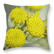 Yellow Cup Buds 1 Throw Pillow