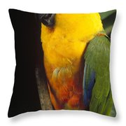 Yellow-faced Parrot Amazona Xanthops Throw Pillow