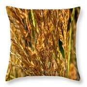 Yellow Feather Reed Grass Throw Pillow