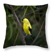 Yellow Finch - Artist Cris Hayes Throw Pillow