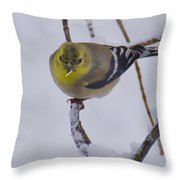 Yellow Finch Cold Snow Throw Pillow