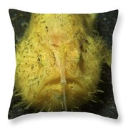 Yellow Frogfish Hunting, North Throw Pillow