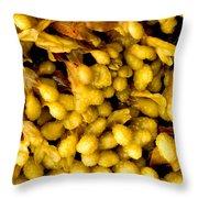Yellow Kelp Pods Throw Pillow