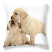 Yellow Lab Puppies Throw Pillow