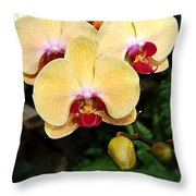 Yellow Moth Orchids Throw Pillow