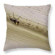 Yellow Palp Spider 1 Throw Pillow