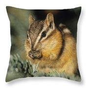 Yellow Pine Chipmunk, Kananaskis Throw Pillow