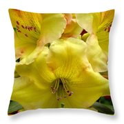 Yellow Rhododendron Trio Throw Pillow